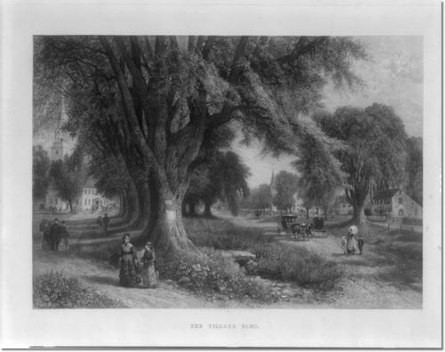 the-village-elms